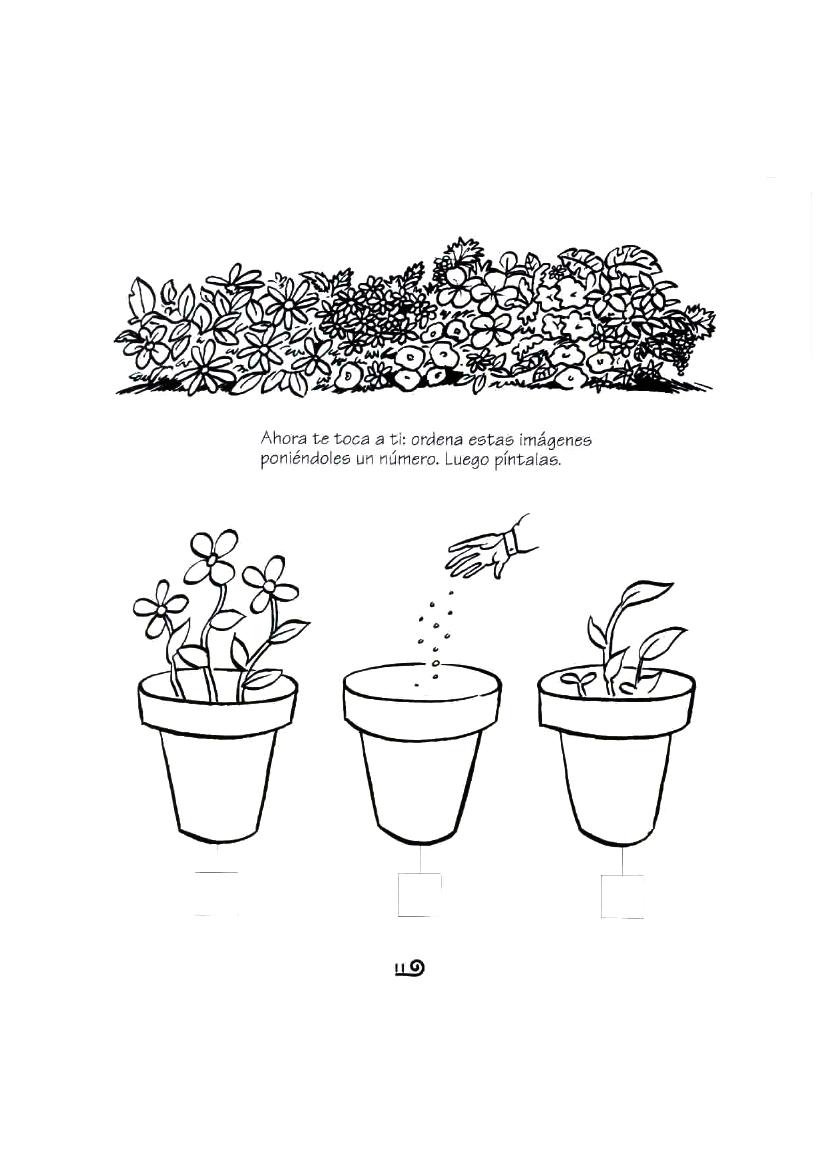 Fichas del ciclo de las plantas ordenar