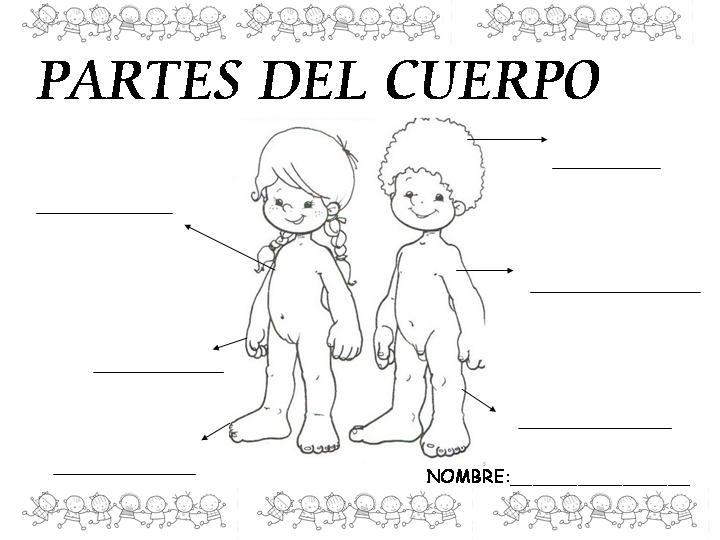 El cuerpo humano en preescolar para niños