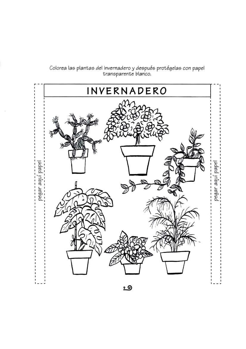 Fichas del ciclo de las plantas